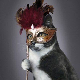 Dögös macskák