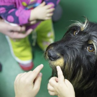 A kutyaterápia ereje