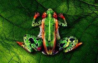 Body art: emberek a béka alatt