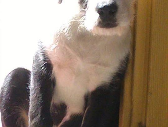 Mentett, keverék kutyák szépségversenye