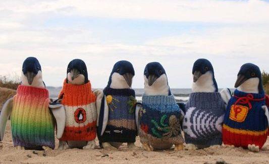 Kötött szvetter pingvineknek
