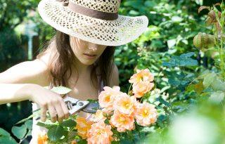Tervezz kertet – 10 hasznos tipp és egyéb ötletek