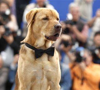 A kutyák vitték a pálmát Cannes-ban