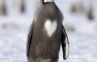 A szerelem havában is menő a pingvin