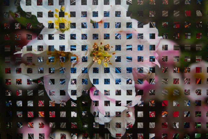 Podmaniczky Ágnes festőművész: itthon szeretnék érvényesülni