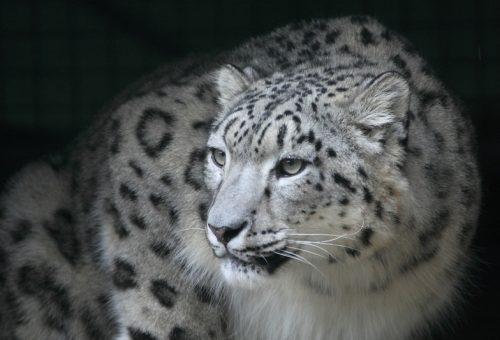 Állatkertek Éjszakája – szerezd be időben a jegyed