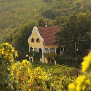 A legszuperebb boros helyek