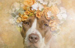 Virágkoszorús pitbullok az internet szépei