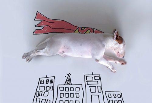 Valódi kutyával díszített rajzok