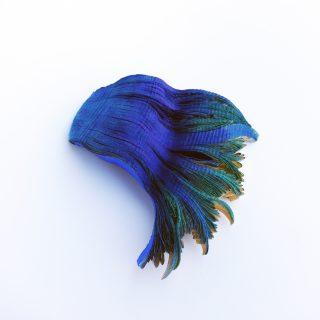Kiállítás ajánló – AGES : CHANGES / Kortárs ékszer – és fotókiállítás