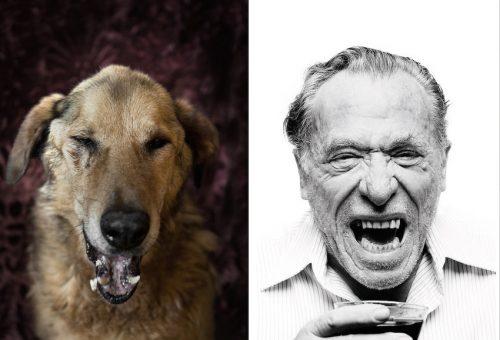 Híres írókra hajazó kutyák várják gazdájukat