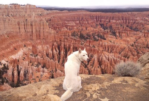 Egy farkaskutya utazásai – képekkel