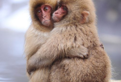 A legcukibb szerelmes állatok