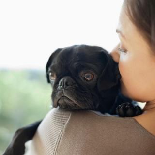Párterápia a kutyádnak és neked