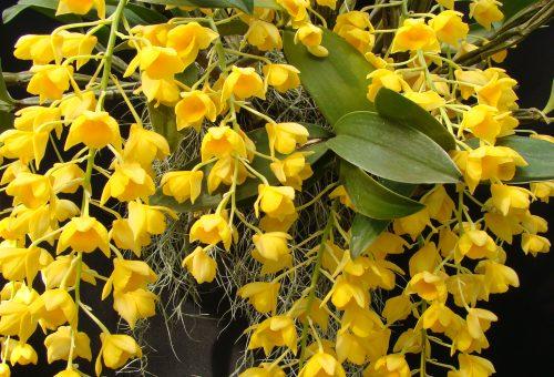 Orchideák hétvégéje