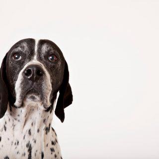 IQ-teszt már kutyáknak is