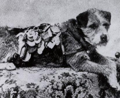 A történelem híres kutyái