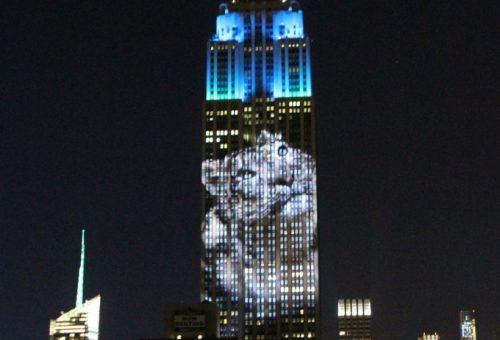 Állatkert az Empire State Building falán