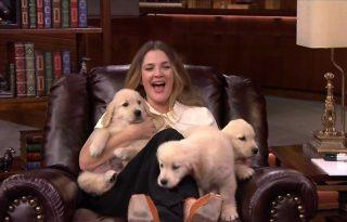 Drew Barrymore és a kutyainvázió