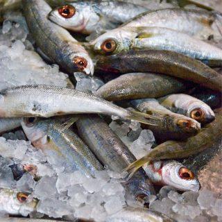Mégsem a halolaj a szellemi frissesség titka?