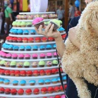 Kisállat örökbefogadással ünnepel a biatorbágyi outletközpont