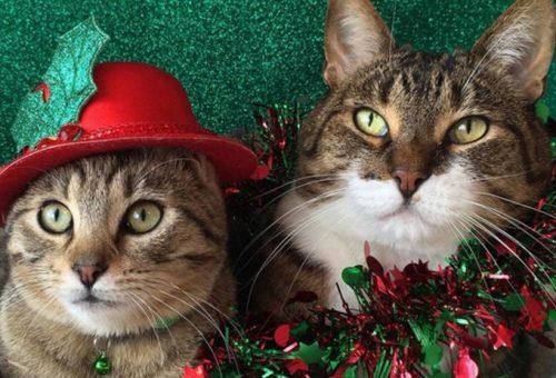 Boldog karácsonyt kívánunk a Marie Claire csapata nevében!