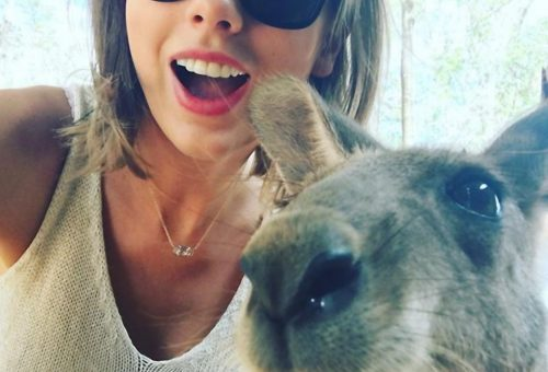 A kenguru, aki Taylor Swifttel selfiezett