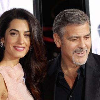 George Clooney és felesége többszörösen sérült kutyust fogadnak örökbe