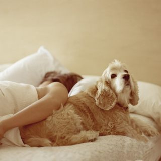 Jó hír: kiderült, hogy kutyával aludni egészséges is lehet