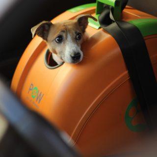 Így szállítsd a kutyádat kocsiban és bringán!