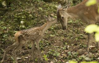 Évszakok premier és összefogás a természetért