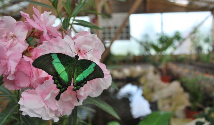 Igazi tavaszi látványosság: pillangókiállítás Budapesten