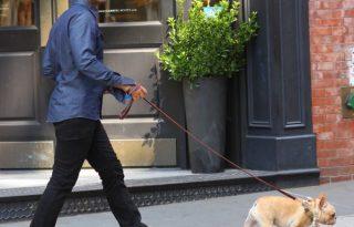 John Legend francia bulldogja gyöngysorban sétál
