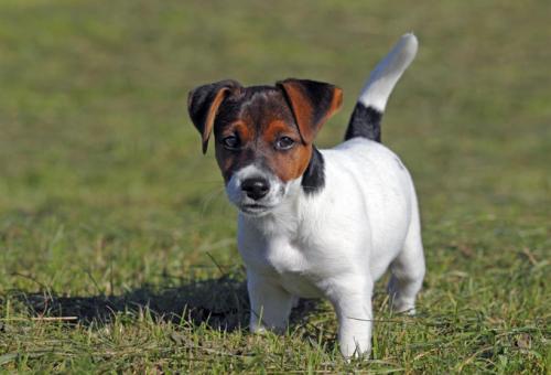 Legyen a kutyád a szakmád – szuper képzések állatbarátoknak