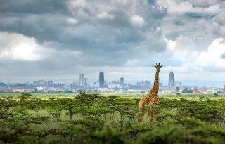 Így élnek a vadak a város mellett