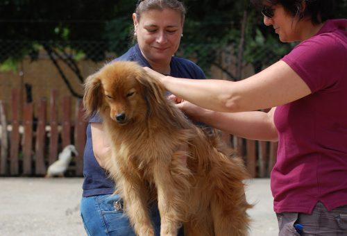 Közel 160 kutya nyara lesz picit gondtalanabb