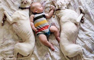 Nora, a legcukibb négylábú bébiszitter