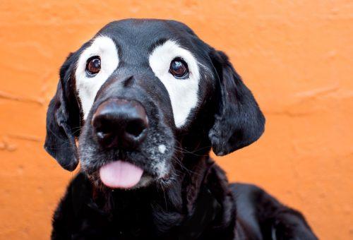Világsztár lett a vitiligós kutya