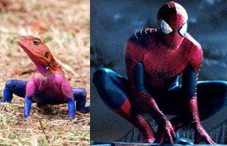 A gyík, aki pont úgy néz ki, mint Pókember