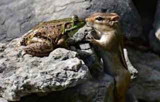 A mókus és a béka csókja