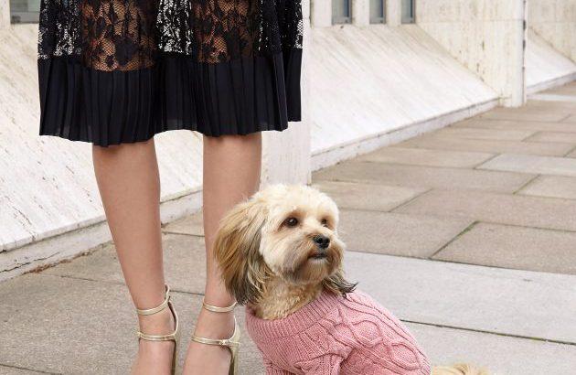 Szupermenő ruhakollekció kutyáknak