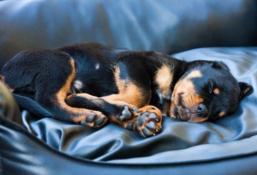 5 ok, amiért nem is olyan rossz, ha az ágyadban alszik a kutyád