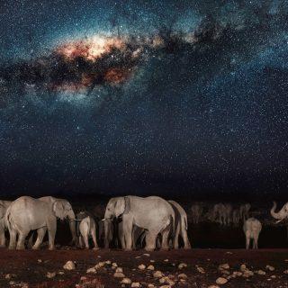 Tejút alatt vonuló elefántcsorda
