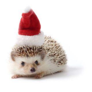Öt hasznos tanács, hogy kevesebb árva kisállat legyen karácsony után