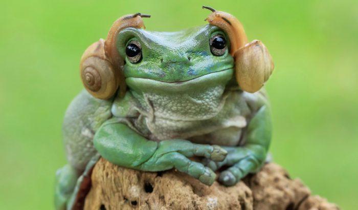 A béka, aki úgy néz ki, mint Leia hercegnő