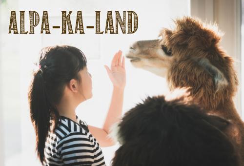 Alpakaterápia – A legfélénkebbeken is segít