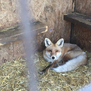 Idén először rendezik meg a Felelős Állattartás Napját