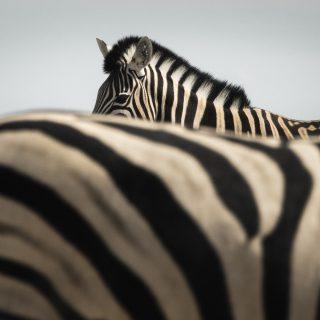 Lélegzetelállító fotósorozat az afrikai vadvilágról