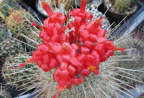 A virágzó sivatag növényei a Füvészkertben