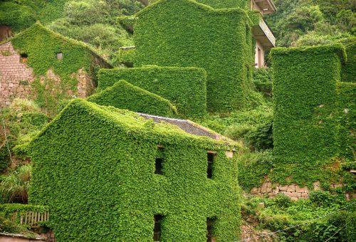 Csodálatos növényváros Kínában